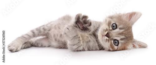 Fotografie, Obraz Kitten on white background.