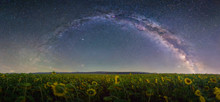 The Milky Way Over A Sunflower...