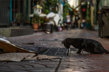 Side View Of A Black Stray Cat...