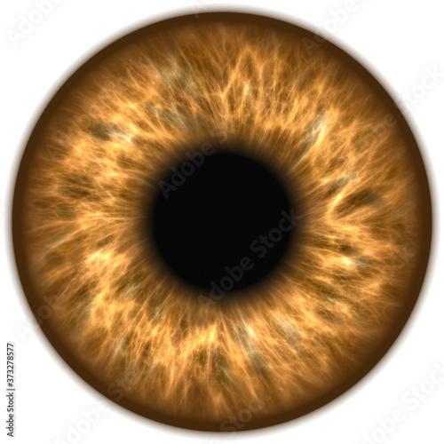 Foto human eye iris