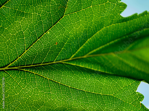 Selective focus shot of tree leaf Canvas