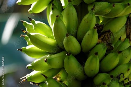 Leinwand Poster Banana fruits, is an elongated, edible fruit