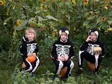 Friendly Family In Carnival Costumes Of Skeletons Sit Among The Thickets Of Sunflower. Halloween Eve.Happy Three Boys With Pumpkins