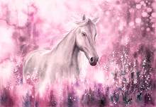 Watercolor Painting - Wild Horse
