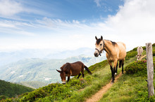 Light Brown Horse And Donkey On A Hiking Trail At Monte Tamaro In Switzerland With Mountain Peaks In The Background In Sunshine.