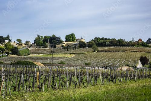 Fotografie, Tablou Famous Vineyard of Saint-Emilion