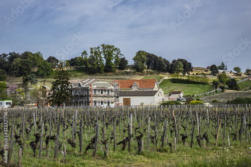 Tablou Canvas Famous Vineyard of Saint-Emilion