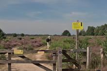 Veluwezoom - Die Heide Blüht
