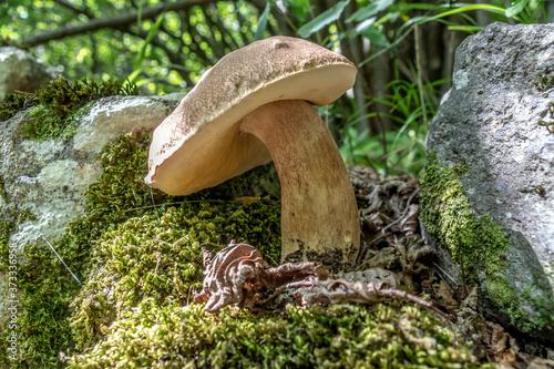 Obraz na plátně champignon