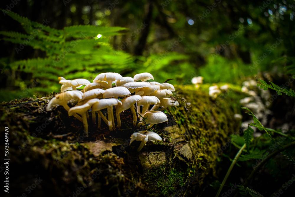 Fototapeta mushroom on the tree