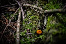 Lonely Mushroom On A Fallen Tr...