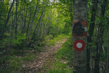Hikers Mark Or Markacija, Panted Circle With A Dot On A Tree Or Stone, To Reveal The Path To The Top Of The Hill.
