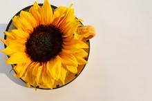 Beautiful Sunflower In Large C...