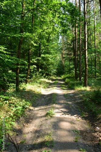 Obraz na plátně Leśna trasa spacerowa wzdłuż jeziora Drwęckiego