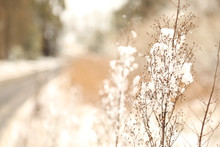 Snow Covered Weeds On Side Of ...
