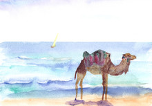 Camel By The Sea, Watercolor D...