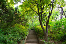 Old Stone Steps In Beautiful P...