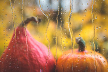 Rain At Autumn. Raindrops On W...