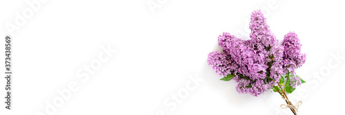 Fotografie, Obraz Banner with bouquet of lilac flowers on a white background
