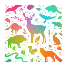 Vector Forest Animals Collecti...