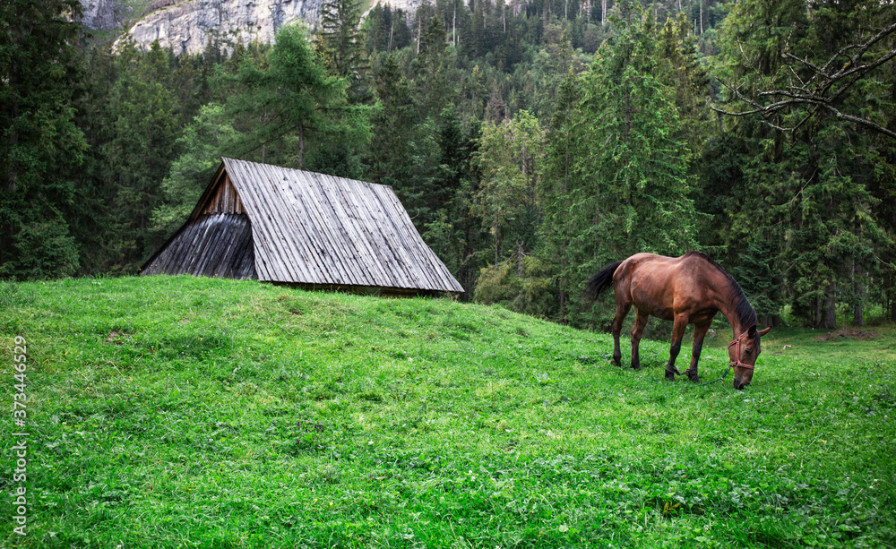 Horse eating grass in a alpine style meadow. Brown horse and wooden house and the forest in the background.