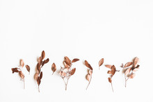 Autumn Composition. Eucalyptus...