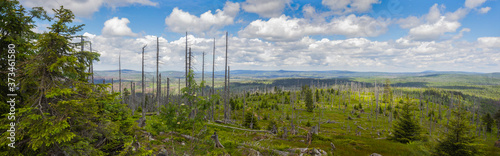 Bare trees in  a new recovering forest with the panoramic view from the Great Ra Fotobehang