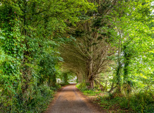 UK Country Lane In August. Devon.