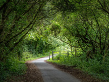 UK Country Lane In August. Tar...