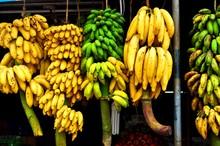 Hanging Bananas.