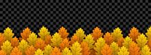 Autumn Oak Leaves On Transpare...