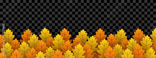 Autumn oak leaves on transparent background. Canvas