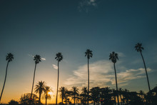 Palm Trees At Sunset Close To ...