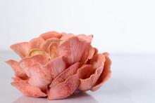 Pink Oyster Mushroom Cluster I...