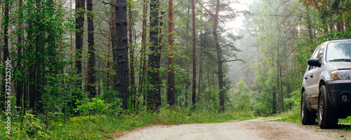 SUV car on the road in a pine forest Canvas