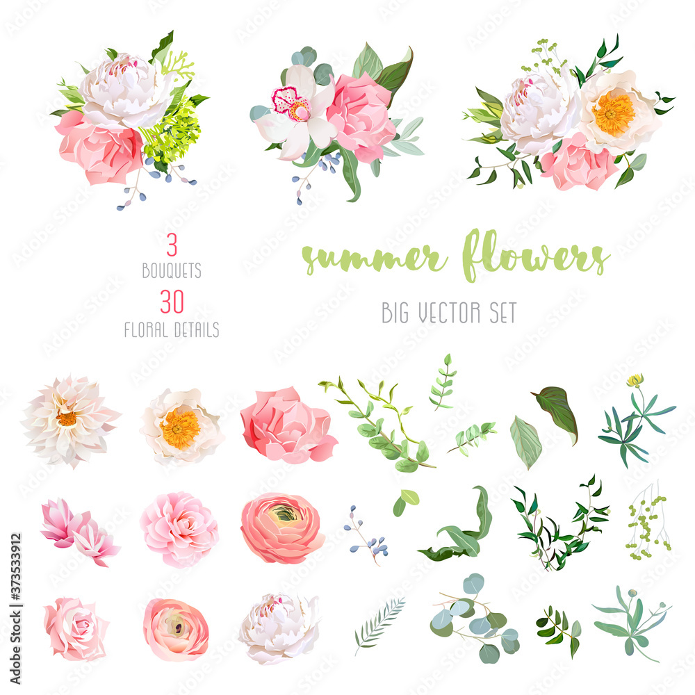 Fototapeta Ranunculus, rose, peony, dahlia, camellia, carnation, orchid, hydrangea flowers and decorative plants big vector collection