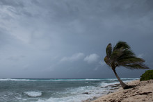 A Palm Tree Getting Blown Around By Hurricane Laura As She Passes Grand Cayman