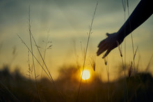 Child Hand Touches The Ears Of Wheat In A Wheat Field At Yellow Sunset