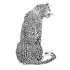 Fototapeta Pantera Japanese style leopard