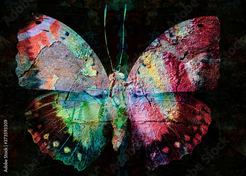 Grunge butterfly colorful