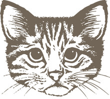Vector Illustration Of A Cat