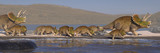 Triceratops horridus family on the beach, dinosaurs from the Jurassic in peaceful landscape