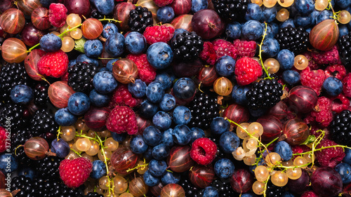 Vászonkép Gooseberries, blueberries, mulberry, raspberries, white and red currants