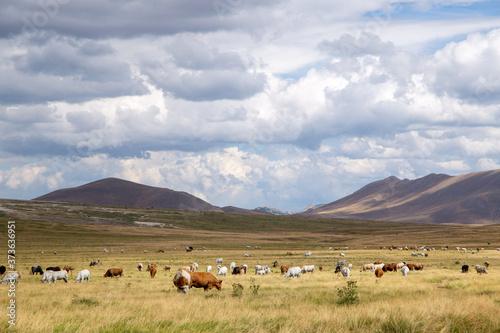 Obraz na plátně gran sasso national park abruzzo italy