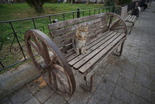 Cat On The Street In Turkey