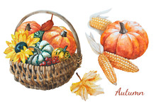Watercolor Autumn Hand Drawn Illustration Of A Wicker Basket With Pumpkins, Sunflower, Berries, Leaves And Corn.