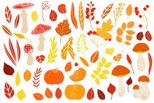 Vector Autumn Set With Leaves, Mushrooms, Pumpkins, Berries.