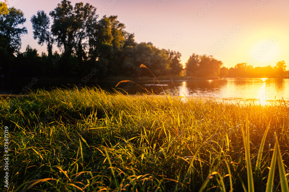 Beautiful sunset in the forest over the pond, golden sunlight on the grass. Stunning landscape