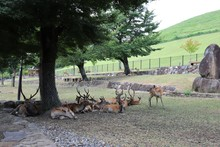 夏の奈良公園