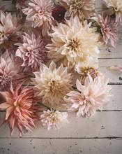 Große Schöne Dahlienblüten Auf Holztisch In Hellen Pastelltönen Als Tischdekoration